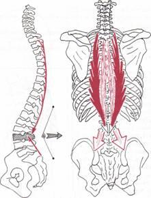 El dolor bajo el borde izquierdo detrás de la espalda de la causa